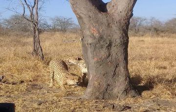 Manyeleti Camp Tour in Kruger National Park