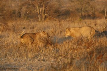 Best of Johannesburg and Kruger National Park