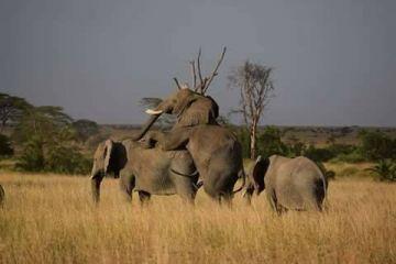 Big five safari