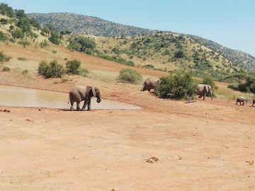 Explore Gauteng and Pilanesberg Nature Reserve