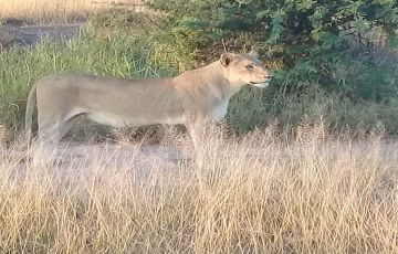 Kruger National Park and Cape Town