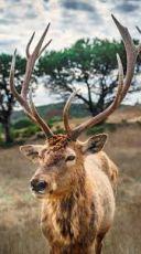 Wildebeest Migration Safari Package