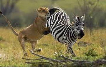 3 days Masai Mara Kenya Adventure Joining Safari