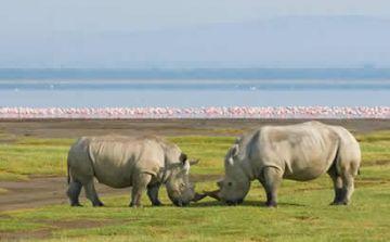 5-Day Amboseli - Lake Nakuru - Masai Mara