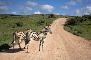 Serengeti national park 3 days 2 nights