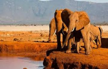 4 DAYS AMBOSELI TSAVO SAFARI