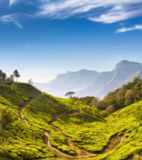 Munnar to Thekkedy Amazing Package For 2N/3D