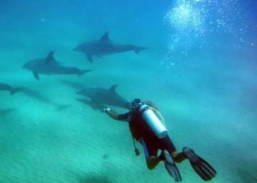 Padi Open Water Course In Maldives