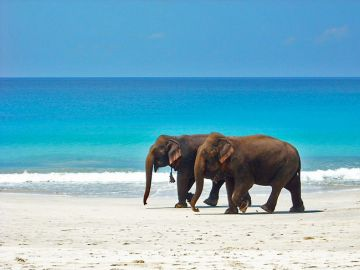 Honeymoon Special Andaman 5 Nights 6 Days Tour Package