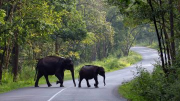 Beauteous valley Munnar & Thekaddy Tour Package