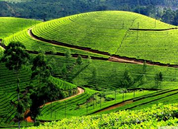 visit to Coorg - Ooty - Mysore Budget