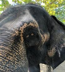 Sri Lanka in a Giffy