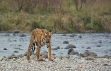 An Adventurous Family Trip To Jim Corbett National Park