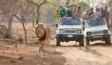 Gujarat Lions of Gir Starting at 8900 Per Person
