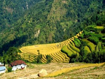 Tour Adviser HEAVEN ON HILLS  Darjeeling 2N / Kalimpong 1N