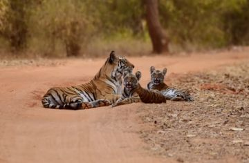 4 nights & 5 Days Assam and Meghalaya Tour Package
