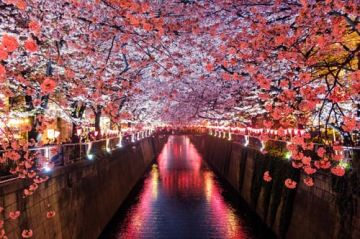 5 nights & 6 days Japan tour package