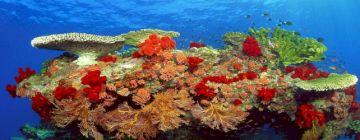 Divine Andaman Couple Tour Packages From Mumbai