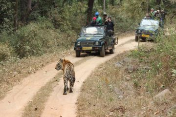 2 Night Kanha Tour Package