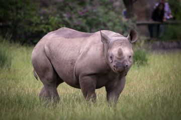 The Land of Rhino - Assam