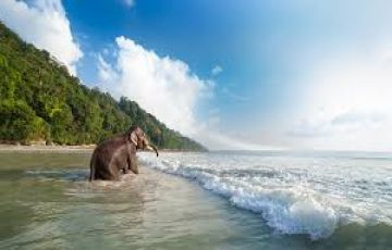 Andaman Tour Package  4N/5D