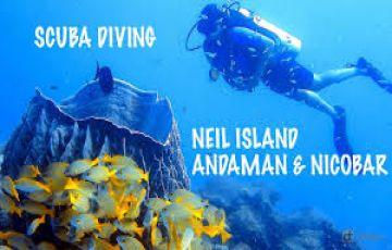 Andaman Tour Package 7 Night 8 Days