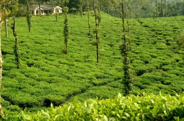 Sizzling Mysore & Coorg 3N4D