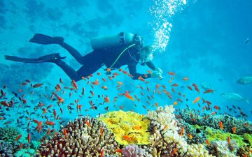 Cheap Affordable Andaman Package 3 days AND 2 Nights  Free Scuba Voucher