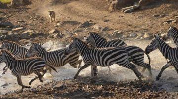 10 Days of Tanzania Safari