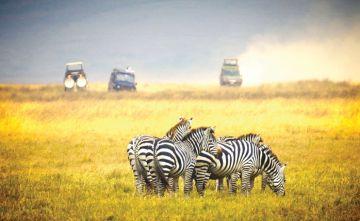 Short Tanzania Safari