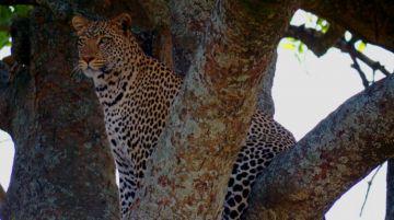 8 Days Deluxe Lodge Safaris