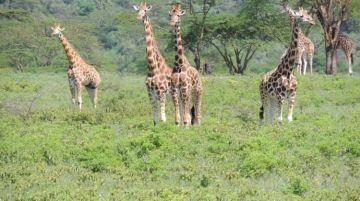 Unparalleled Safari of Serengeti & Zanzibar