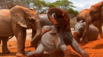 8 Days Samburu, Olpejeta, Maasai Mara Safari