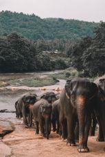 Platinum of Sri Lanka