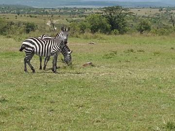 Jewels of Tanzania Wildlife Safari
