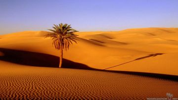 Dubai with Desert Safari, Dhow Cruise & City Tour