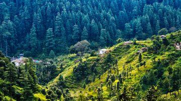 Experience The Nature - Haridwar, Corbett, Kausani, Ranikhet, Nainital