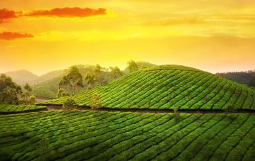 Kerala Tour Package for couple with Price
