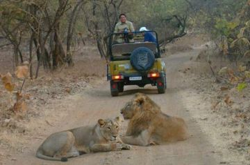 Dwarka - Somnath - Gir National Park