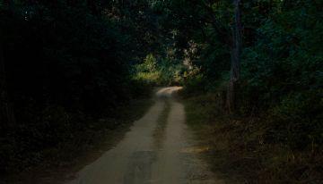 Nainital Dhikala Tour