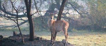 Wildlife tour of Bharaptur, Rajasthan with Taj Mahal