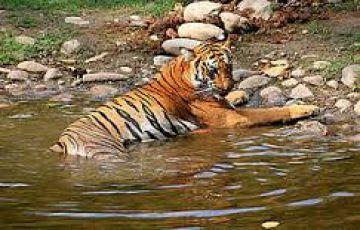India Tiger tours