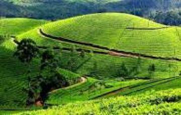 Amazing Munnar tour 2nights/3days
