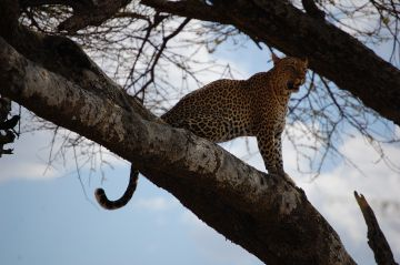 Tanzania Luxury Safari to Serengeti   Ngorongoro   Manyara