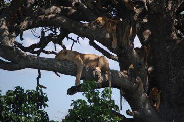 TANZANIA SAFARI -SERENGETI | TARANGIRE | NGORONGORO