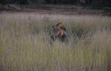 Kurger National Park Safari Tour Package