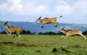 OPTION :6 KENYA WILDLIFE SAFARI