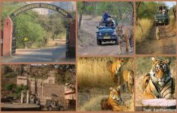 Jaipur History with Ranthambore Sanctuary
