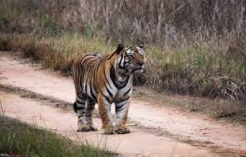 MP Heritage and tiger tours