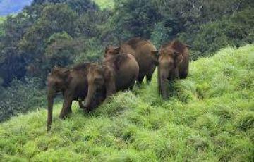Munnar-thekkady